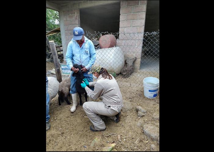 PARTICIPA EDOMÉX EN CAMPAÑA NACIONAL CONTRA LA BRUCELOSIS ANIMAL