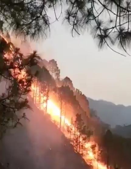 PELIGRA FAUNA SILVESTRE POR INCENDIO FORESTAL EN NUEVA DELHI