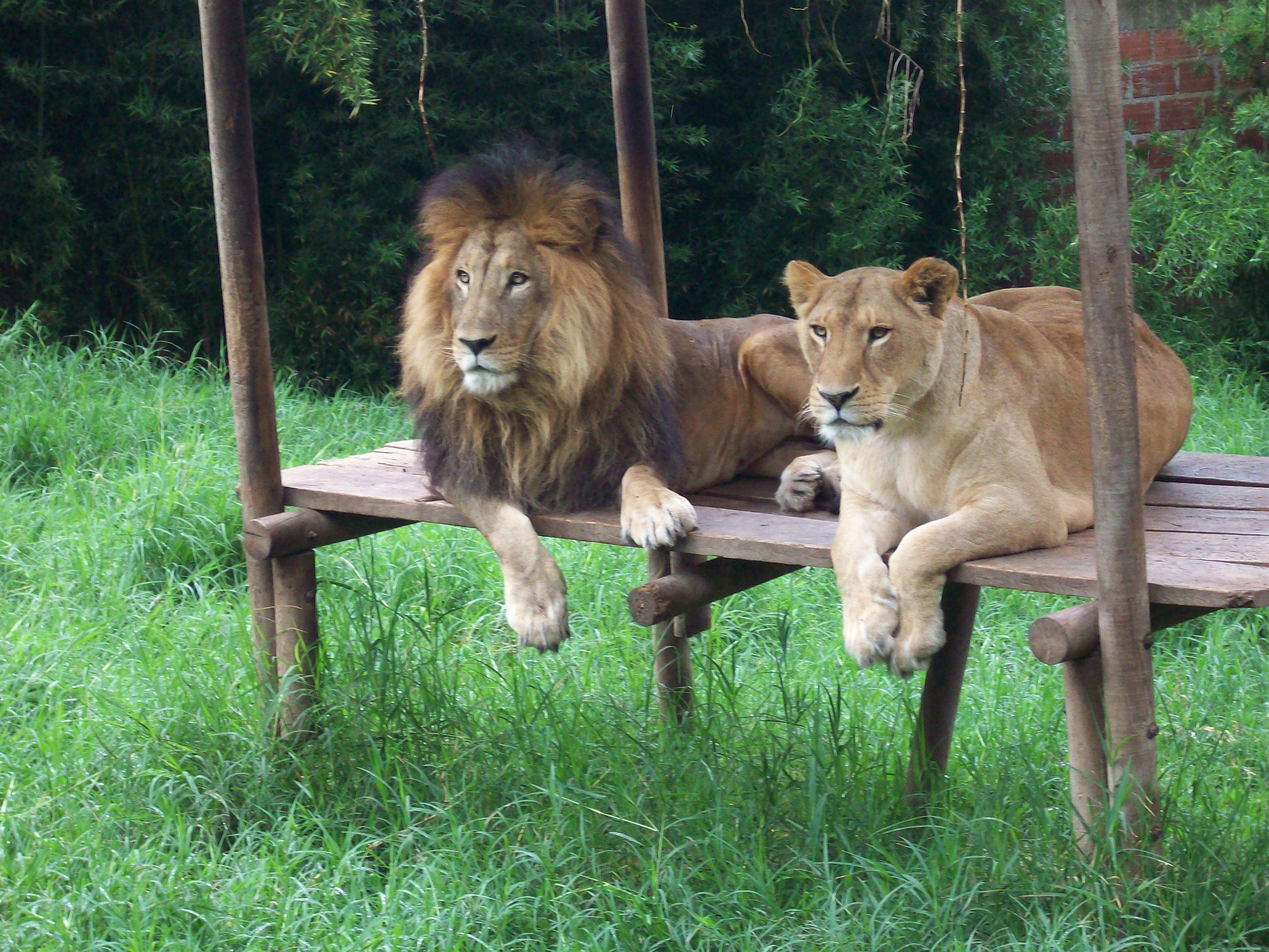 AZCARM OBTIENE DONATIVOS PARA ALIMENTAR ANIMALES SILVESTRES